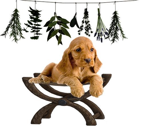 alternative heilmittel für hunde