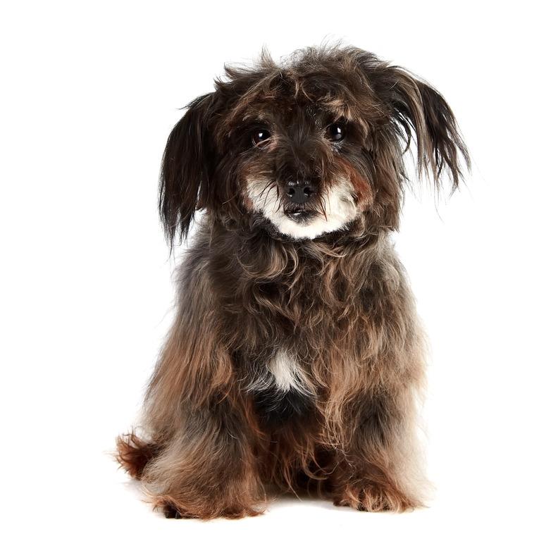 demodex milben beim hund mit hausmitteln nat rlich behandeln hunde vital shop f r gesunde hunde. Black Bedroom Furniture Sets. Home Design Ideas